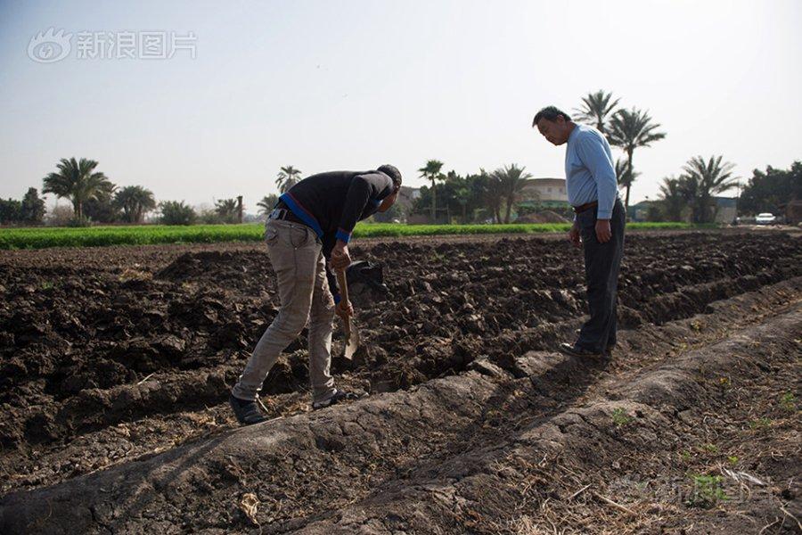 لوه ون مينج التاجر المزارع الصيني