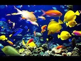 كمية طعام سمك الزينة في الحوض