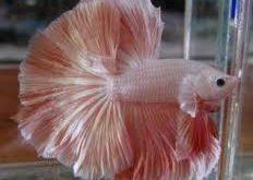 تربية الاسماك في الاحواض البلاستيكية